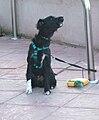 Dog howling 001.jpg