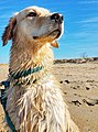 Dogs love Virginia State Parks (32669076335).jpg