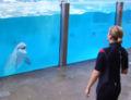 Dolphinarium Boudewjinpark 05.JPG