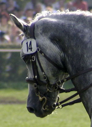 Double bridle - Double bridle, with both curb and snaffle bits.