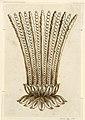 Drawing, Design for brooch, 1800–1810 (CH 18560205).jpg