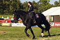 Dressage individuel mondial du cheval percheron 2011Cl J Weber03 (24083479015).jpg