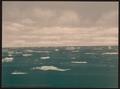Drifting ice, Spitzbergen, Norway-LCCN2001700739.tif