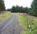 Driveway into the plantation, Wooldale township, Holmfirth - geograph.org.uk - 747422.jpg
