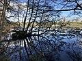Duckspiderreflection.jpg