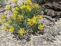 Dudley Bluffs Twinpod (5716434336).jpg