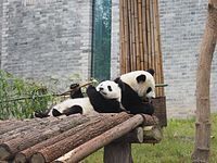 Dujiangyan Giant Panda Center (24174153046).jpg