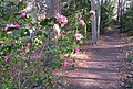 Duke Gardens - March 15, 2010 - IMG 4867.JPG