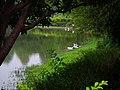 Eco Pond in Daan Forest Park 大安森林公園生態池 - panoramio.jpg