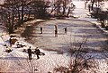 Edge Hill College pond skaters - geograph.org.uk - 635215.jpg