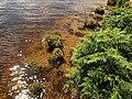 Edge of Fernworthy Reservoir - geograph.org.uk - 897277.jpg