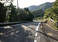 Ehime Prefectural Road No.21 on west side of Mimura Pass 4.jpg
