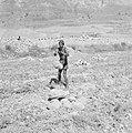 Ein Gedi. Een landbouwer maakt zijn akker vrij van stenen alvorens te gaan ploeg, Bestanddeelnr 255-2733.jpg