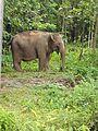 Elephant123.jpg