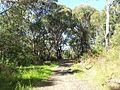 Engadine NSW 2233, Australia - panoramio (154).jpg