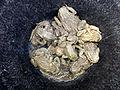 Erdkröten.JPG