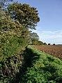 Even Dike and Westlands Plantation - geograph.org.uk - 263405.jpg