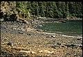 Exxon Valdez Oil Spill.jpg