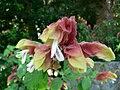 Fale - Giardini Botanici Hanbury in Ventimiglia - 551.jpg