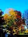 Fall in Madison - panoramio (5).jpg