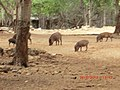 Family Outing at the Tiger Temple - panoramio.jpg