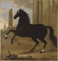 Favourite, one of King Karl XI's riding horses (David Klöcker Ehrenstrahl) - Nationalmuseum - 39546.tif