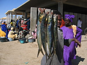 Fish market nouakchott mauritania