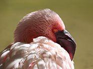 FlamingoSD.jpg