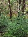 Flickr - Nicholas T - Henry's Woods (3).jpg
