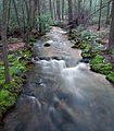 Flickr - Nicholas T - Joyce Kilmer Natural Area (2).jpg
