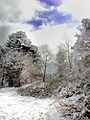 Flickr - Per Ola Wiberg ~ mostly away - Winter garden.jpg