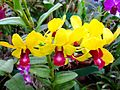Flickr - ronsaunders47 - TRIO OF ORCHIDS.jpg