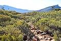 Flinders Ranges SA 5434, Australia - panoramio (36).jpg