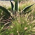 Flora Parque La Mexicana.jpg