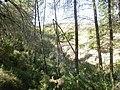 Flora cerca de la fuente del Viso - panoramio.jpg