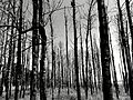 Floresta morta.jpg
