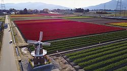 ファイル:Flowers of Spring in Gosen City, Japan - Aerial Video.webm