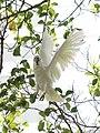 Flying (16140579343).jpg