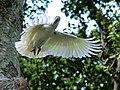 Flying (16760520655).jpg