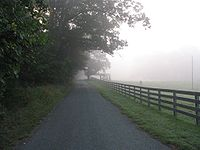 Foggy morning road - visibility at 200 ft.jpg