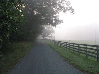 Visibility - Foggy morning road