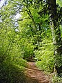 Footpath along Selborne Hanger - geograph.org.uk - 1536818.jpg