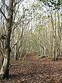 Footpath in Paraker Wood - geograph.org.uk - 2170600.jpg