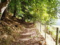 Footpath through Coed Bwlch Coch. - geograph.org.uk - 247573.jpg