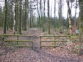 Footpath through Downlands Plantation - geograph.org.uk - 1776287.jpg