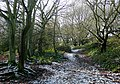 Footpath through woodland, Colton Hills, Wolverhampton - geograph.org.uk - 1634437.jpg