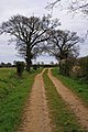 Footpath to Allan's Farm - geograph.org.uk - 395204.jpg