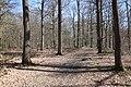 Forêt Départementale de Beauplan à Saint-Rémy-lès-Chevreuse le 14 mars 2018 - 10.jpg