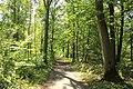 Forêt de Bon-Secours 07.jpg