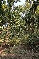 Forest - Budhibili - Dandadhar Road - Dhenkanal 2018-01-25 9635.JPG